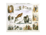 The Seal and the Walrus, C1850 Giclee Print by Benjamin Waterhouse Hawkins