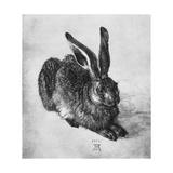 Hare, 1502 Giclee Print by Albrecht Durer