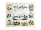 The Whale, C1850 Giclee Print by Benjamin Waterhouse Hawkins