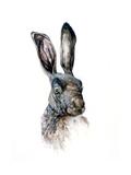Study of a Hare, 1502 Reproduction procédé giclée par Albrecht Durer