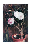 Camelias, 19th Century Giclee Print by Antonio Costa