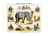 The Elephant, C1850 Giclee Print by Benjamin Waterhouse Hawkins