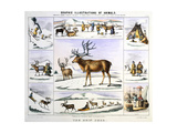 The Rein Deer, C1850 Giclee Print by Benjamin Waterhouse Hawkins