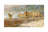 On the Bank of an African River, 1918 Giclee Print by Briton Riviere