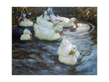 Ducks on a Pond, C1884-1932 Giclee Print by Alexander Koester