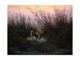 Swans in the Reeds, C1794-C1831 Wydruk giclee autor Caspar David Friedrich