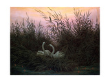 Swans in the Reeds, C1794-C1831 Giclee Print by Caspar David Friedrich