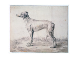 Greyhound, 1644 Giclee Print by Cornelis Saftleven