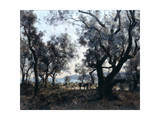 Olive Trees around Cap Martin, 1891 Giclee Print by Emmanuel Lansyer
