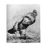 La Coq, C1850-1910 Giclee Print by Felix Bracquemond