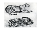 Studies of Panthers, 1913 Giclee Print by Eugène Delacroix