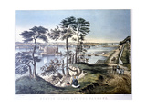 Staten Island and the Narrows, New York, USA, C1834-C1876 Giclee Print by Frances Flora Bond Palmer