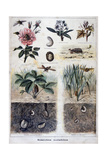 Harmful Insects, 1897 Giclee Print by F Meaulle