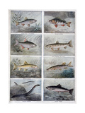 Freshwater Fish, 1897 Giclee Print by F Meaulle
