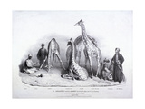 Giraffes at the Zoological Gardens, Regent's Park, Marylebone, London, 1836 Giclee Print by George Scharf