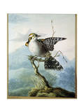 A Little Bird, 1798 Giclee Print by Georgius Jacobus Johannes van Os