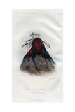 Heo-A-H'Co-A-H'-Cotes-Min, a Flat Head Warrior, 1848 Giclee Print by  Harris