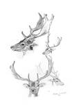 Stags' Heads, 1898 Giclee Print by Henry Moore
