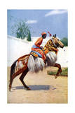 An Arab Dancing Horse, Udaipur, India, 1922 Giclee Print by Herbert Ponting