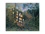 Tropical Forest: Battling Tiger and Buffalo, 1908 Giclee Print by Henri Rousseau