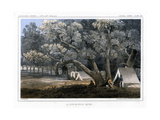 A Cotton Wood Grove, 1856 Giclee Print by John Mix Stanley