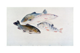 Study of Fish: Two Tench, a Trout and a Perch, C1822-1824 Giclee Print by Joseph Mallord William Turner
