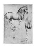 Leonardo da Vinci - Studies of Horses, C1490 - Giclee Baskı
