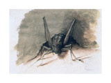 Green Grasshopper, 16th Century Giclee Print by Joris Hoefnagel