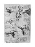 Study of Shoulder Joints, 1510-1511 Giclée-Druck von  Leonardo da Vinci