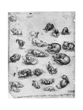 Studies of Cats, 1513-1515 Giclee Print by  Leonardo da Vinci