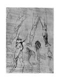 Studies in Comparative Anatomy, 1506-1507 Giclee Print by  Leonardo da Vinci