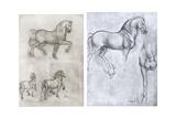 Horses, C1490-1510 Giclee Print by  Leonardo da Vinci