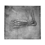 Muscles and Sinews in a Foot, Possibly of a Hare, Late 15th or Early 16th Century Giclee Print by  Leonardo da Vinci