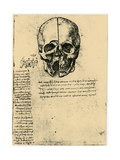 Anatomical Sketch of a Human Skull, C1472-1519 Giclee Print by  Leonardo da Vinci