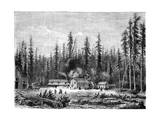 Giant Sequoia Forest, California, 19th Century Giclee Print by Paul Huet