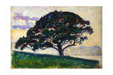 Large Pine, Saint-Tropez, 1892-1893 Giclee Print by Paul Signac