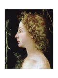The Young Saint John the Baptist, C1482-1522 Giclee Print by Piero di Cosimo