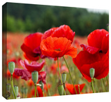 _3986 Gallery-Wrapped Canvas Stretched Canvas Print