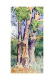 Study of Trees, C1842-1899 Giclee Print by Rosa Bonheur