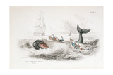 Harpooning a Sperm Whale, 1837 Giclee Print by William Jardine