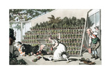 Misfortune in the Tulip Hall, C1816 Giclee Print by Thomas Rowlandson