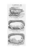 A Darwinian Idea, 1865 Giclee Print by TW Woods