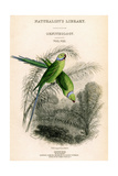 The Naturalist's Library, Ornithology Vol VIII, Red Ringed Parrakeet, C1833-1865 Giclee Print by William Home Lizars