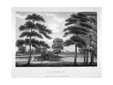 View of Clapham, London, 1792 Giclee Print by William Ellis