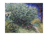 Lilac Bush, 1889 Reproduction procédé giclée par Vincent van Gogh