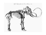 Woolly Mammoth (Mammuthu) Skeleton, 1830 Giclee Print