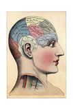 Phrenology Chart, Showing Presumed Areas of Activity of the Brain, C1920 Giclee Print