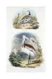 Bustards, 1835 Giclee Print