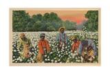 Cotton Picking, Augusta, Georgia, 1943 Giclee Print