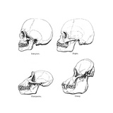 Lateral View of the Skull or Profile, 1848 Giclee Print